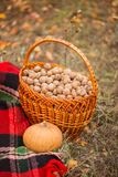 Posizione di autunno, canestro con le noci Immagini Stock