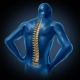 Posizione posteriore della spina dorsale dell'essere umano Immagini Stock
