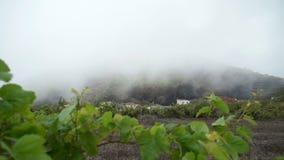Posizione sul piede della montagna in nebbia stock footage