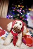 Posizione sveglia del cane Fotografia Stock Libera da Diritti