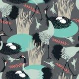 Pospolici żurawie i gniazdeczko w bagnie Obraz Royalty Free