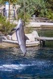 Pospolity bottlenose delfin, zoo Fotografia Royalty Free