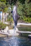 Pospolity bottlenose delfin, zoo Obraz Stock