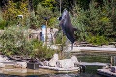 Pospolity bottlenose delfin, zoo Obraz Royalty Free