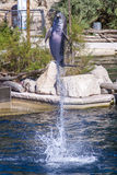 Pospolity bottlenose delfin, zoo Obrazy Stock