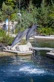 Pospolity bottlenose delfin, zoo Fotografia Stock