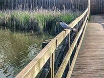 Pospolity tern mostk?w hirundo umieszcza? na ogrodzeniu nad jezioro wod? z z?apan? ryb? w belfrze fotografia royalty free