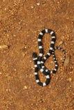 Pospolity uzda wąż, Dryocalamus nympha, Hampi, Karnataka, India fotografia stock