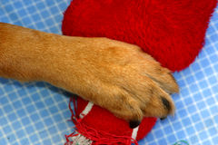 Possession. Dog paw on a toy showing possession or ownership Royalty Free Stock Image