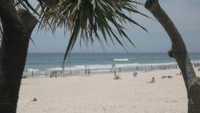 Possibilidade remota de paraíso principal dos surfistas da praia quadro por plantas do pandanus video estoque