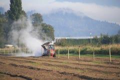 Possibilità remota che fertilizza Berry Field Fotografia Stock