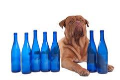 Posso eu ter uma outra bebida? fotografia de stock