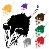 Possum Royalty Free Stock Image