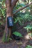 Possum oklepa obwieszenie na drzewie w Nowa Zelandia obrazy royalty free