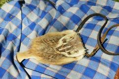 Possum Purse Stock Photos