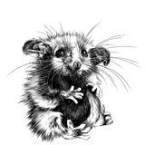 Possum sketch vector. A possum sits a little cute funny, sketch vector graphics black and white drawing Stock Photography