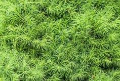 postępowego tła dobry zielony fotografii rośliny proces Zdjęcie Stock