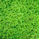 postępowego tła dobry zielony fotografii rośliny proces Fotografia Royalty Free