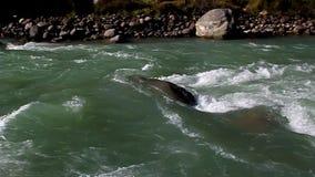 Post, halny rzeczny spływanie wśród kamieni zdjęcie wideo