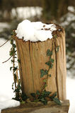 Post with ivy in the snow. Photograph of a wooden post with Ivy shot in the winter with snow Stock Photos
