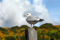 Post Perch Royalty Free Stock Image