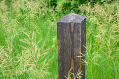 Post in the Seeding Grass Stock Image