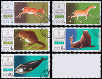 Post stamp. Animals. Soviet - circa 1974: A post stamp printed in the Soviet shows image of Animals, series Mammalogy International Congress, circa 1974 Royalty Free Stock Photo
