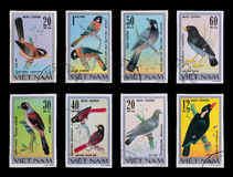 Post stamp. Birds. Vietnam - circa 1978: A post stamp printed in the Vietnam shows image of birds, series Birds, circa 1978 Stock Images