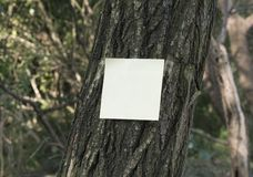 Post it on tree Royalty Free Stock Image
