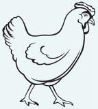 Postać kurczak Zdjęcia Stock