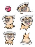 Postać z kreskówki mopsa psa pozy Śliczny zwierzę domowe pies w płaskim stylu psy ustawiający obraz stock