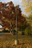 Posta della lampada nella caduta Fotografie Stock