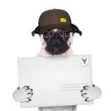 Posta di consegna del cane Immagini Stock