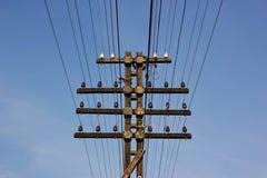 Posta di elettricità in Tailandia Fotografia Stock