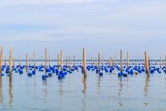 Posta per alimentare le cozze nel mare Immagini Stock
