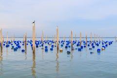 Posta per alimentare le cozze nel mare Fotografia Stock