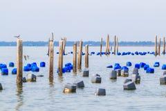 Posta per alimentare le cozze nel mare Fotografia Stock Libera da Diritti