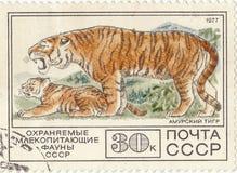Postage stamp `Amur Tiger`. Soviet postage stamp `Amur Tiger Stock Photos