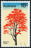 Postage stamp - Australia. Illawarra Flame Stock Photos