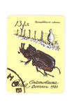 Postage stamp beetle Royalty Free Stock Photography