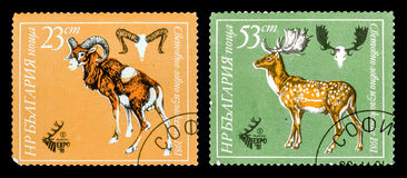 The Postage Stamp. DZERZHINSK, RUSSIA - FEBRUARY 11, 2016: Set of a postage stamp of BULGARIA shows deer and ram, circa 1981 Royalty Free Stock Images