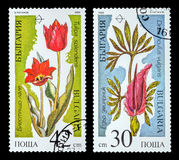 The Postage Stamp. DZERZHINSK, RUSSIA - FEBRUARY 11, 2016: Set of a postage stamp of BULGARIA shows spring flowers, circa 1989 Royalty Free Stock Photography