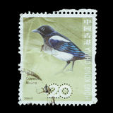 Postage Stamp isolated Royalty Free Stock Image