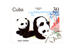 Postage stamp panda. Object on white - Cuban postage stamp Stock Images