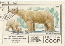 Postage stamp Polar bear. Soviet postage stamp Polar bear1977 Stock Images