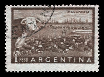 Stamp printed in Argentina shows a heard of beef cattle in the Argentinean walking through a gate in a fence Stock Photos