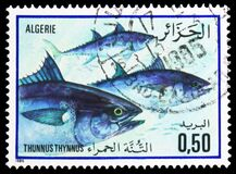 Free Postage Stamp Printed In Algeria Shows Atlantic Bluefin Thuna Thunnus Thynnus, Fish Serie, Circa 1985 Stock Photos - 181305983