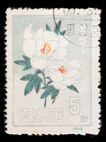 Postage stamp printed in North Korea shows a Japanese rose Stock Images