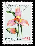 Postage stamp printed by Poland royalty free stock photo
