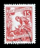Postage stamp printed by Yugoslavia. Cancelled postage stamp printed by Yugoslavia, that shows Agriculture, circa 1950 stock photos
